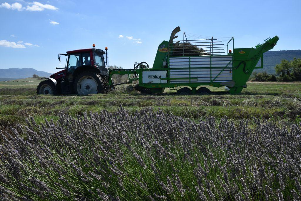 tractor pulled lavender harvester
