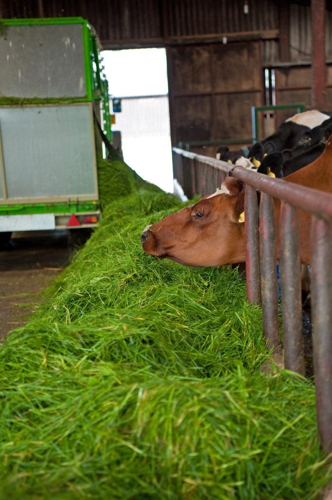 Bonino Zero Grazer Grass Feeding